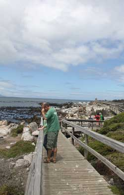 Boardwals or wooden walkways provide safe viewing for people at the penguin colony in Betty's Bay South Africa